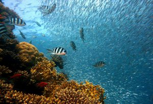 לחובבי אטרקציות מים ציוד מומלץ לצילום בים-